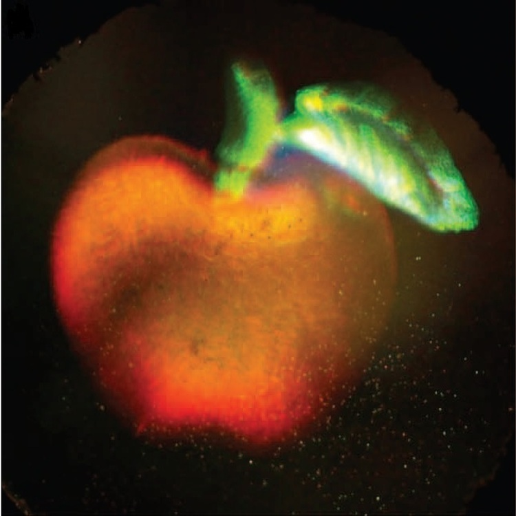 A 3D full color hologram of an apple. The image shown here is a photograph of a hologram that records the three dimensional structure of an apple and leaf in full color. This frame is part of a video that demonstrates how changing the viewer's perspective of the hologram alters its appearance, as would happen when viewing the original object.