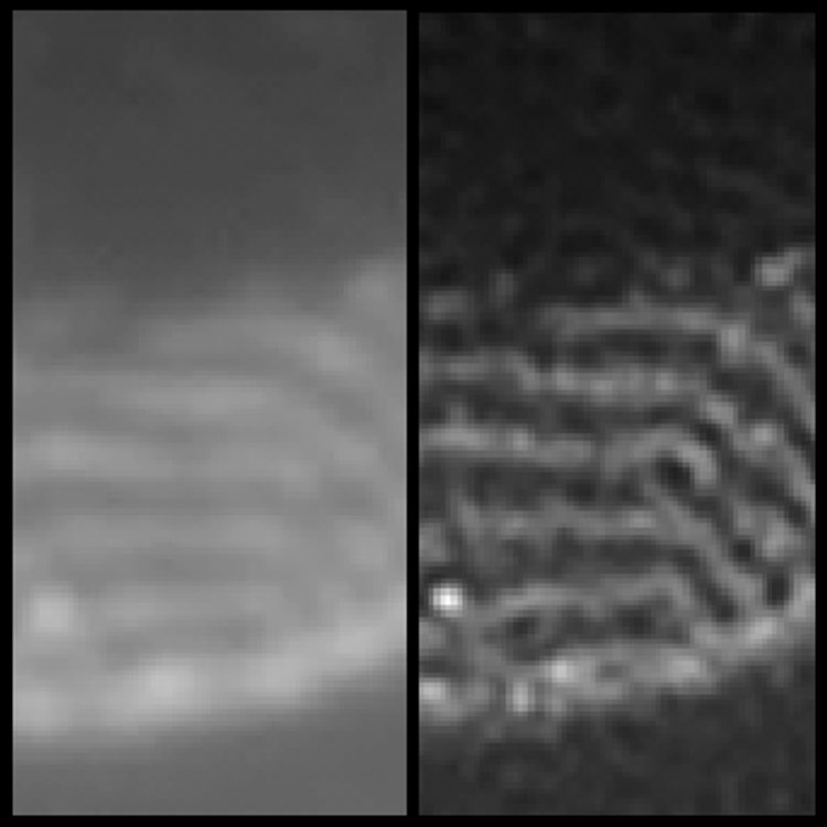 Images out of noise. These two images represent the same sample under a uniform illumination (left) and after the reconstruction technique of Sentenac and colleagues (right), where more details can be distinguished.