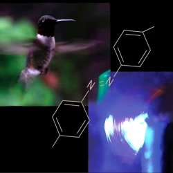 The polymeric hummingbird's wing. A polymeric cantilever containing  photosensitive molecules (azobenzene, shown in the picture) starts to oscillate rapidly when exposed to light radiation. Just like the oscillations of a hummingbird's wing, these oscillations occur at about thirty cycles per second (30 Hz).